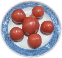 高原トマト1.jpg